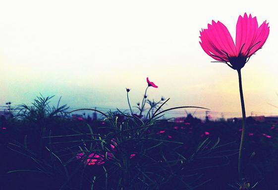 Nếu niềm tin lạc đường, hãy tìm cho mình ngã rẽ chân thành bình yên nhất.